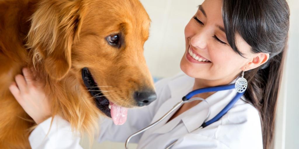 Leishmaniose canina: como diagnosticar