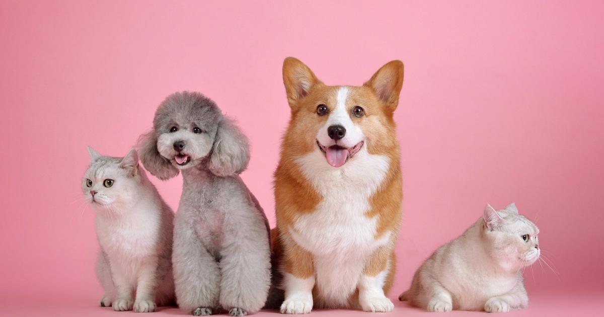 Quimioterapia em cães e gatos: como funciona